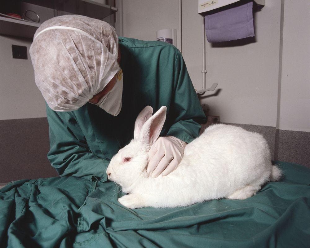 Причины абсцесса у кролика