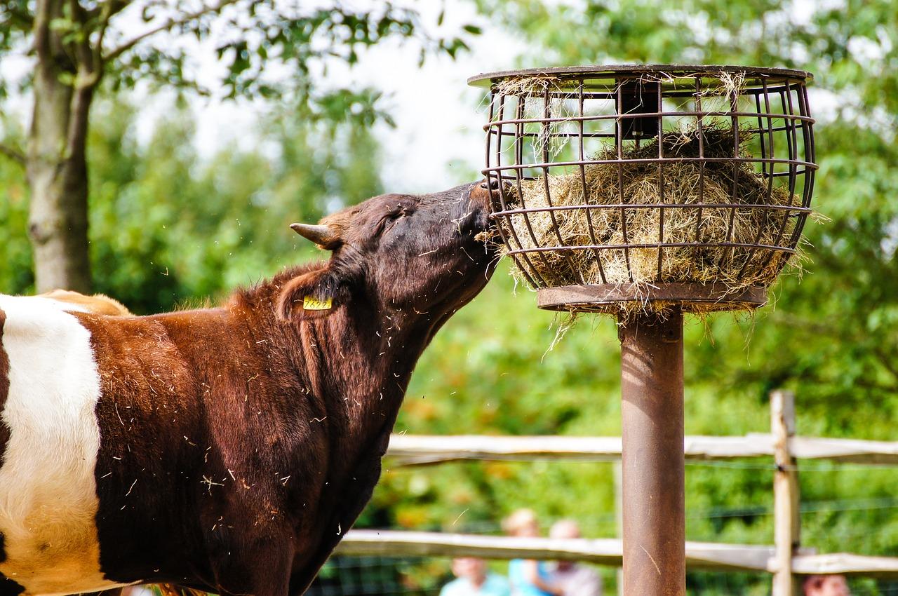 Рацион коров в зависимости от вида