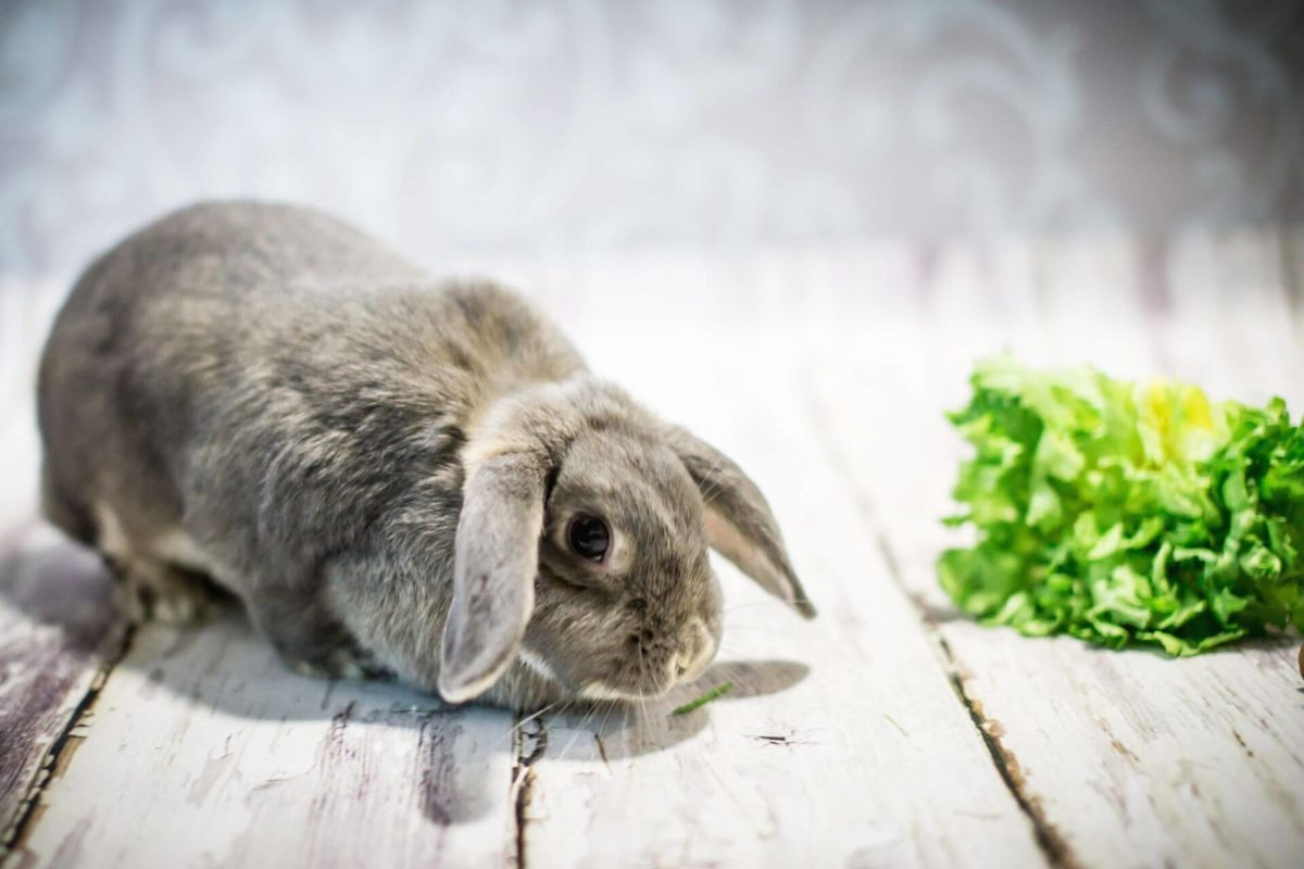 Кролик не ходит на лоток