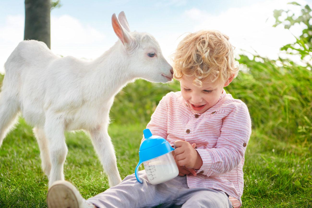 Особенности выбора козы без запаха