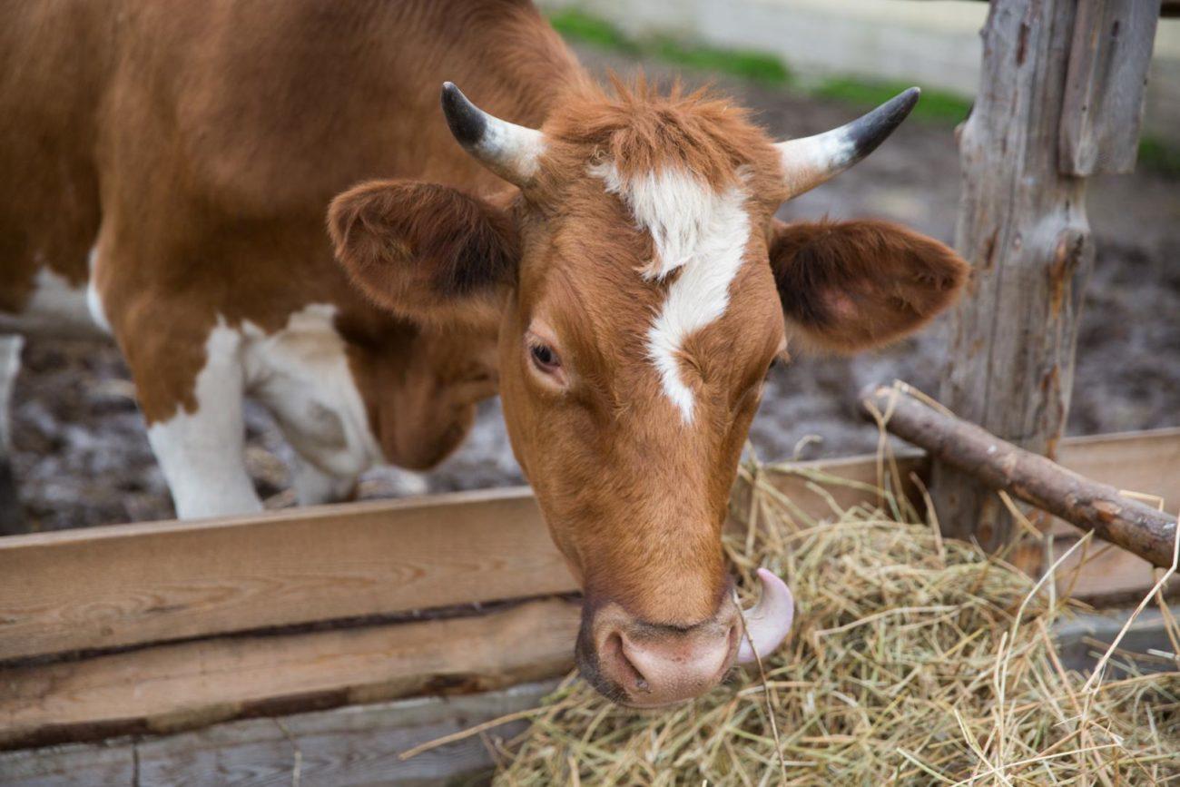 Биостимуляторы для быка