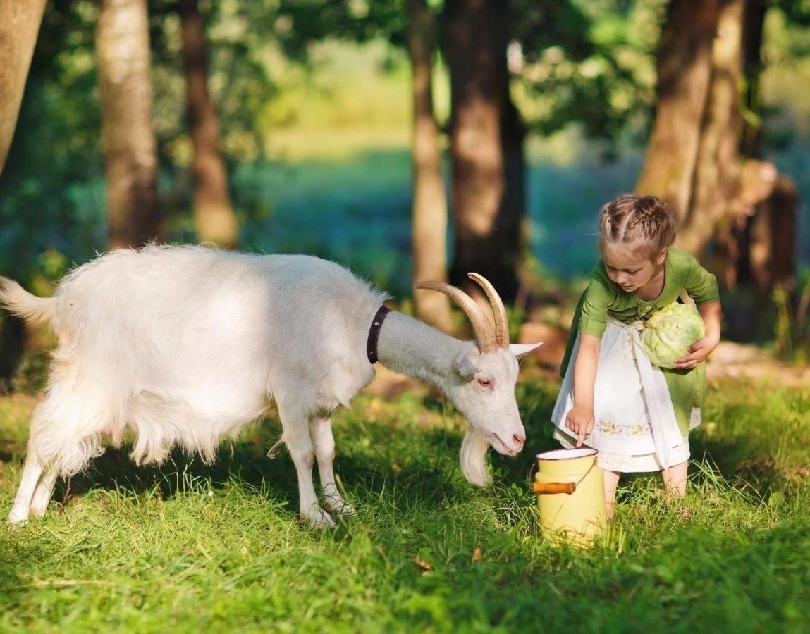 Породы козы без запаха