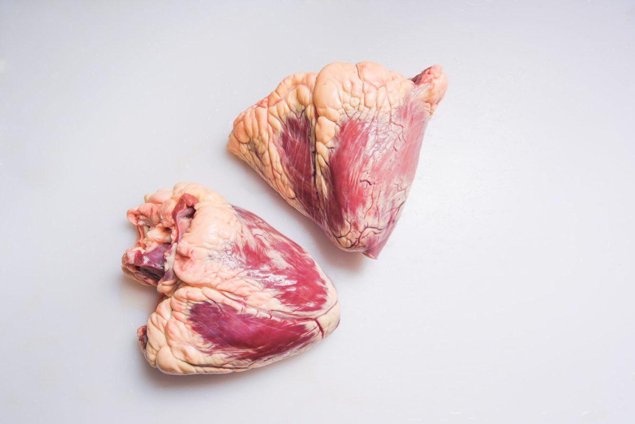 Сердце и сосуды коровы