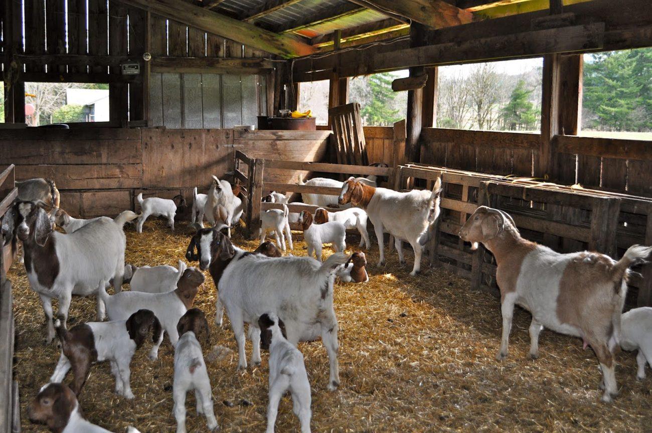 Сарай для коз стены и окна