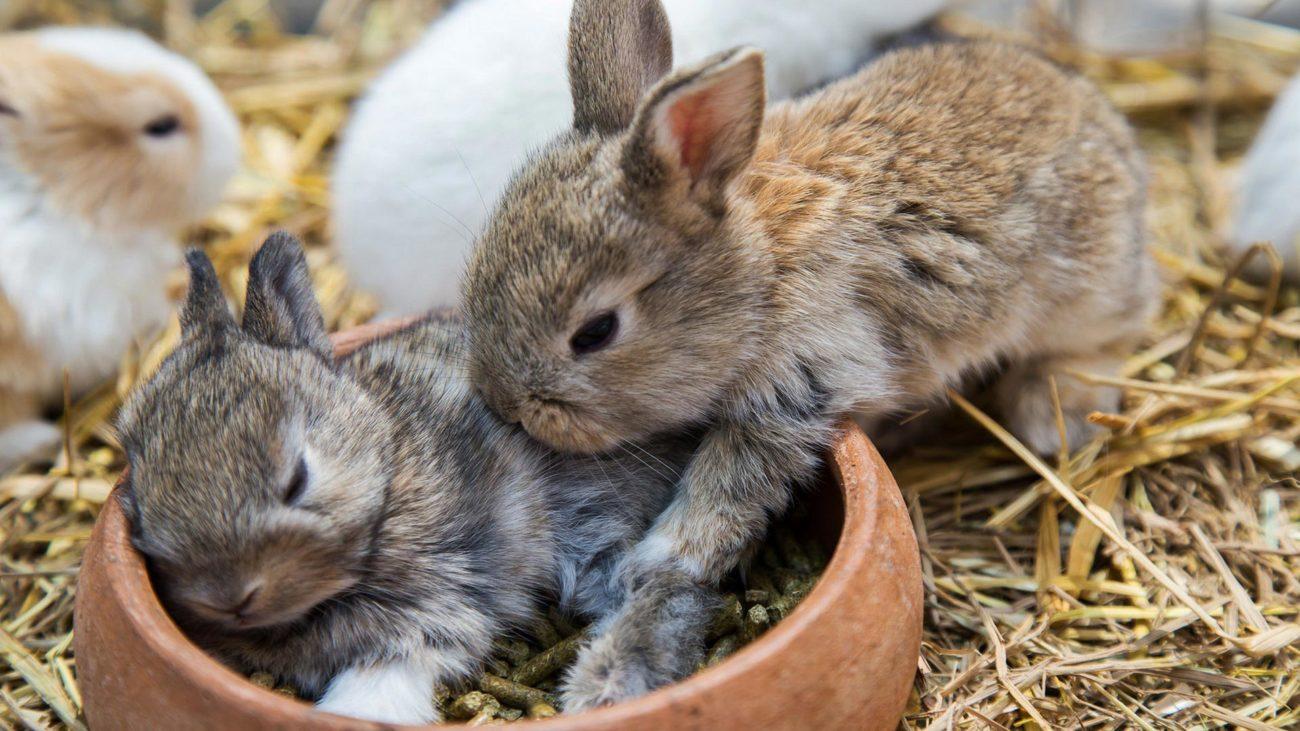 почему погибают маленькие кролики