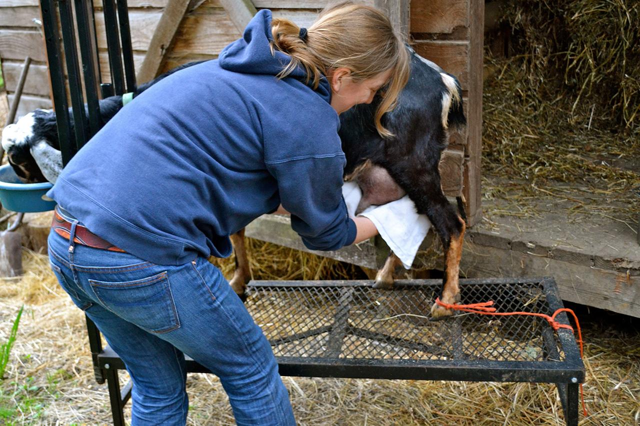 Препараты для доения козы