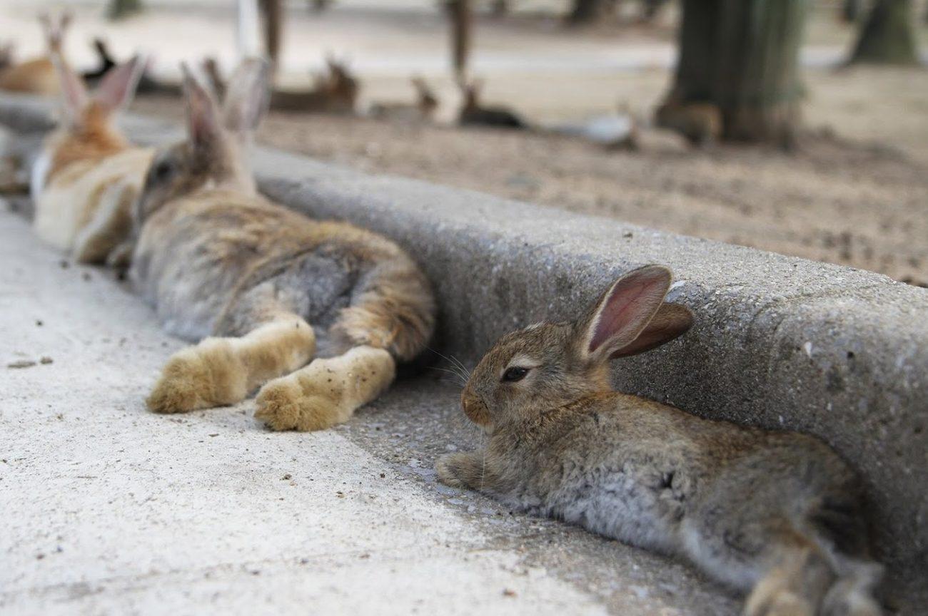 почему кролики падают