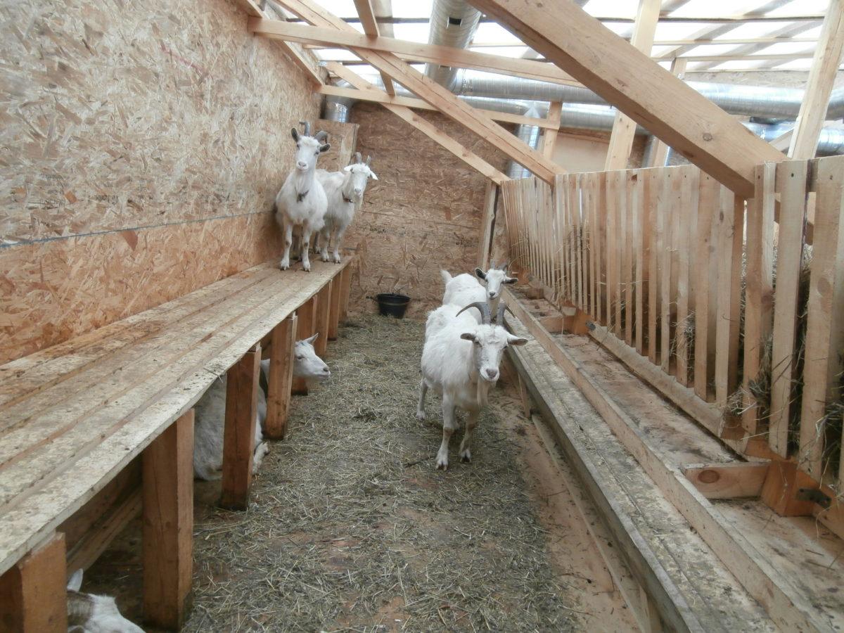 Сарай для коз напольное покрытие