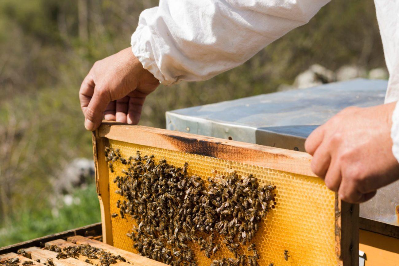 рамки для пчел