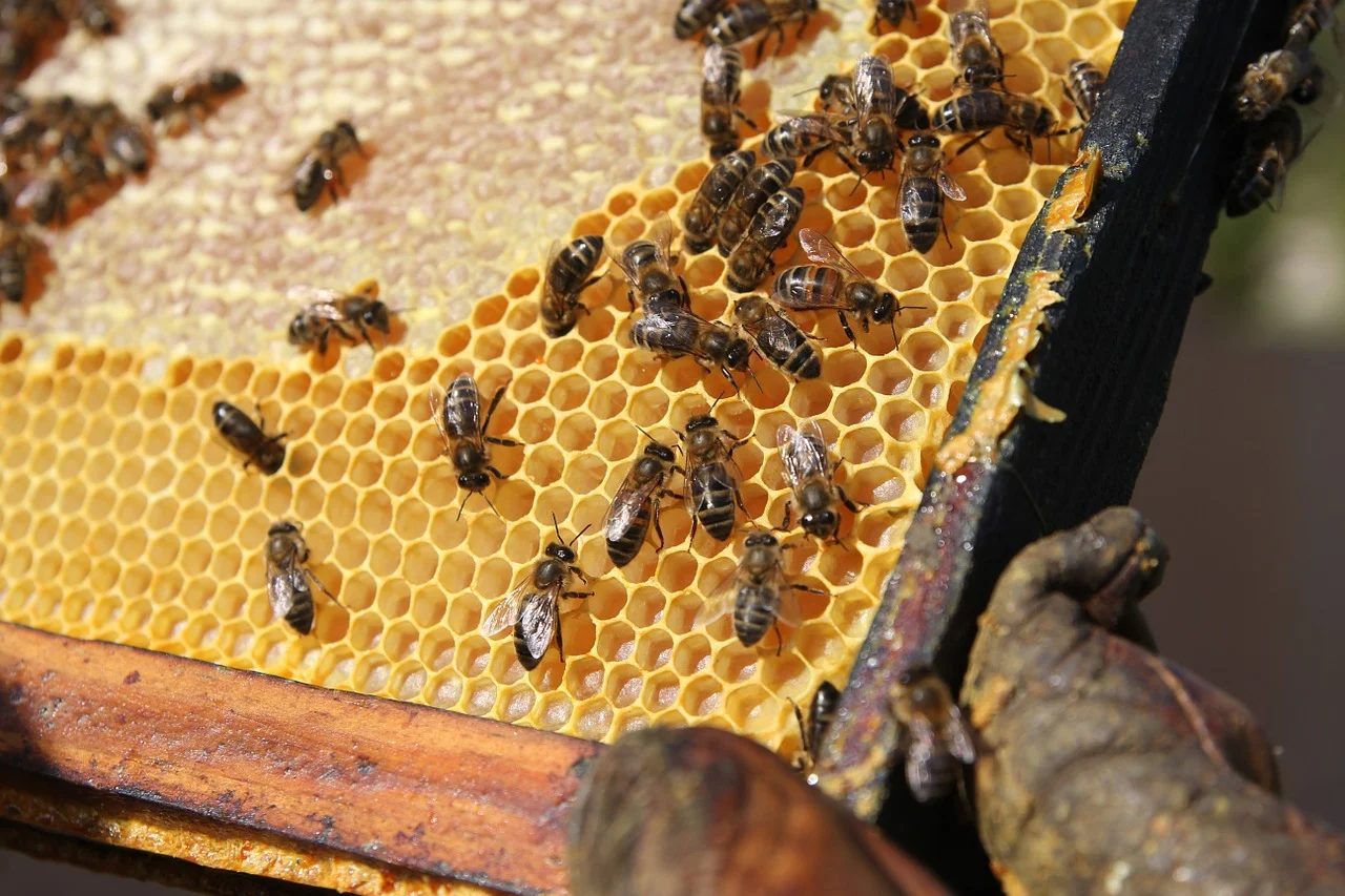 сколько стоят пчелы