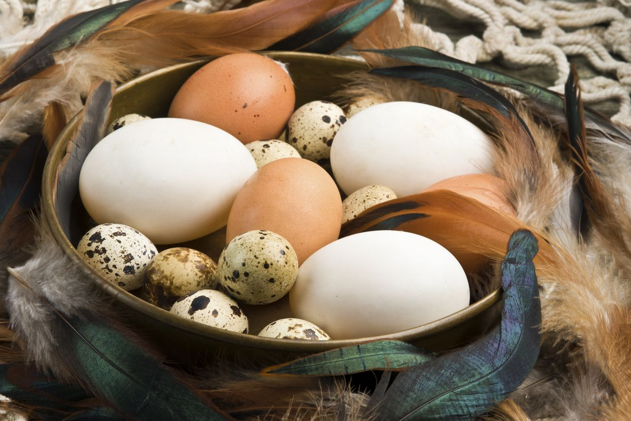гуси несут яйца